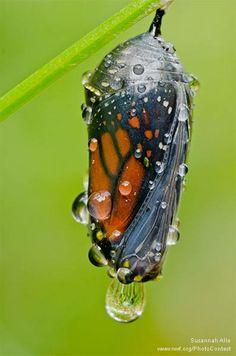 Butterfly birthday.