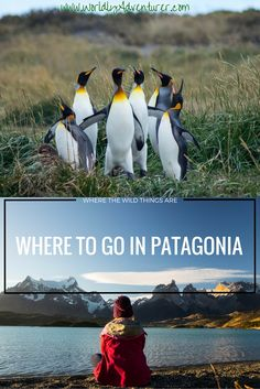 Patagonia, one of South America's most wild, yet mesmerising destinations. From acapella-singing King Penguin colonies, to trekking at the end of the world, here's my list of where to go in Patagonia, with my personal highlights from this spellbinding part of South America.