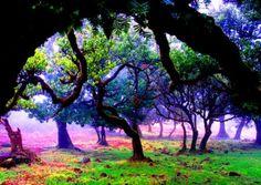 Madeira  Reissureppu.com