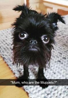 Funny Snapchat Dogs 38 Photos