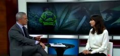 When Cop That Locked up Thousands for Weed, Becomes Exec Of a Major Cannabis Company – Zenpype