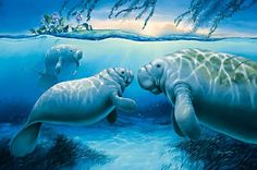 Year of the Manatee - By Sherry Vintson