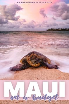 Maui on a Budget: 12 Cheap & Free Things to do in Maui I what to do in Maui I where to go in Maui I places to go in Maui I Maui attractions I attractions in Maui I budget guide to Maui I Hawaii travel I things to do in Hawaii I where to go in Hawaii I places to go in Hawaii I Hawaii attractions I Hawaii on a budget I budget guide to Hawaii I free things to do in Hawaii I what to do in Hawaii I how to travel Hawaii on a budget I budget tips for Hawaii I tips for Maui I #Hawaii #Maui
