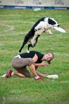 Border Collie catching a frisbee.