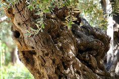 Garden Of Gethsemane Treasures