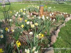 Butterfly Garden - how to plant one here.