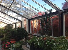 Happy plants in our newly restored greenhouse!
