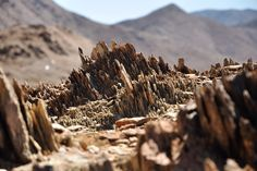 Trip to Richtersveld desert in South Africa by Geology and pictures of landscape. Travel Tours, Geology, South Africa, Succulents, Deserts, Scenery, Landscape, Pictures, Photos