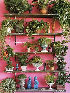 A Garden Wall. A beautiful display of an indoor garden / indoor plants. Plant Wall, Plant Decor, Spring Garden, Home And Garden, Murs Roses, Decoration Plante, Pot Jardin, Pot Plante, Plant Shelves