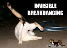 Invisible Funnies On Pinterest Cats Humor Cat Toys And Funny Cat Memes