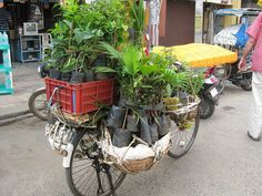 Tamil Nadu, India vegetable bike by Mirth2012, via Flickr green way to sell plants!