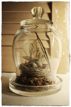 Birds Nest & Cloche Jar
