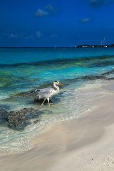 Kuramathi Island - Maldives