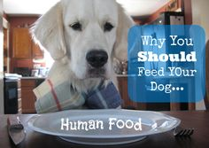 Why You Should Feed Your Dog Human Food