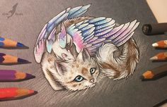AlviaAlcedo.deviantart.com  I love this kitty and I love this artist's drawings.