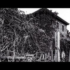 Reverse Stillwater winter calls #winter #skrwtapp #relightapp #blackandwhitephotography #vines #brick #captureminnesota #stillwatermn