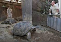 Mural Animal: Tartaruga gigante de 150 anos é eutanasiada em zoológico