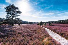 Erleben Sie die Heideblüte in Niedersachsen! Heide Park, Germany, Country Roads, Travel, Outdoor, Tri Fold Brochure, Road Trip Destinations, Hiking, Outdoors