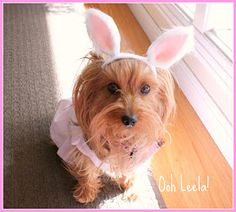 Ooh Leela!: Easter project: no-sew bunny ears for your pet - a tutorial by Ooh Leela!
