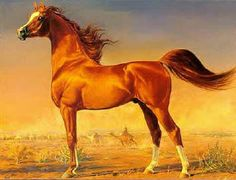 This painting is of an elegant Arabian Horse