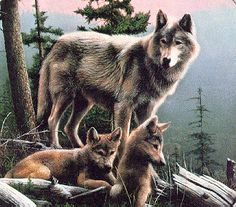 Young Wolves