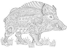 Stylized wild boar (razorback, warthog, hog, pig). Freehand sketch for adult anti stress coloring book page with doodle and zentangle elements. | Vector | Colourbox on Colourbox