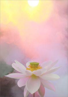 Lotus Flower - DD0A2612-1000   by Bahman Farzad