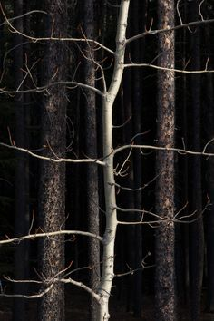 Find images and videos about tree and forest on We Heart It - the app to get lost in what you love. Dark Tales, White Photography, Nature Photography, Artistic Photography, Amazing Photography, Landscape Photography, Arbour Day, Over The Garden Wall, Tree Forest