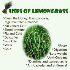 Uses of Lemongrass.  I am an IPC (independent product consultant) for doTerra Essentiial Oils, interested in incorporating them into your healthy lifestyle click on my link below, search my website and msg me with questions. www.mydoterra.com...