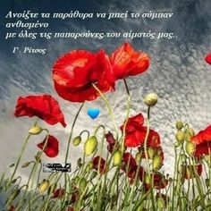 Greek Quotes, Quotations, Me Quotes, Wisdom, Words, Flowers, Plants, Sayings, Pictures