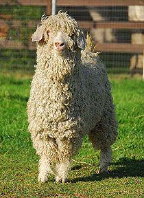 Cute = awesome yarn.