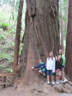 kids Muir Woods National Monument, Couple Photos, Awesome, Places, Kids, Couple Shots, Young Children, Boys, Couple Photography