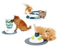 circuit training for your cats!