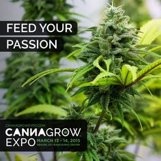 Get registered at CannaGrowExpo.com  #cannabis #mmj #growing #explore #learn #cannabiscommunity #march2015