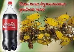 НАПОИТЕ ТЛЮ КОКА-КОЛОЙ ДО СМЕРТИ!. Обсуждение на LiveInternet - Российский…