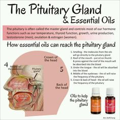 Pituitary gland and Young Living Essential Oils. A more natural way of living… Doterra Oils, Doterra Essential Oils, Natural Essential Oils, Essential Oil Blends, Yl Oils, Essential Oils For Thyroid, Doterra Products, Young Living Oils, Young Living Essential Oils