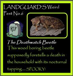 Control Issues, Pest Control, Deathwatch, Beetle, Yorkshire, Food, June Bug, Beetles, Essen