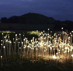 This gorgeous alternative is the work of Bruce Munro, and is formed of acrylic tubes containing optical fibers – fields and fields of them. The design is currently being showcased at  the Eden Project in England, but as soon as it's an affordable option in the marketplace, expect to see these glowing softly in every garden.