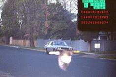 Motorista sortudo é salvo de multa por pássaro