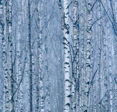 View all wallpaper murals from Mr Perswall. Innovative photo wallpaper murals for every personality. Unique Wallpaper, Tree Wallpaper, Wallpaper Online, Photo Wallpaper, Bar Areas, Winter Trees, Off The Wall, Wall Murals, Paper Art