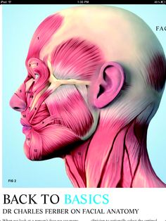 Dr. Charles Ferber on Facial Anatomy