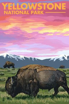 Yellowstone National Park - Bison & Sunset - Lantern Press Poster