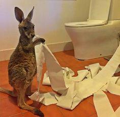 "Kangaroo: ""It wasn't me!"" (Photo By: @thekangaroosanctuary on Instagram.)"