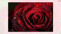 As rosas não falam   Emilio Santiago