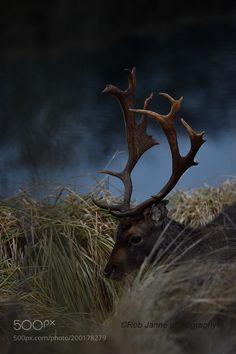 Dark Deer by Rob_Janne