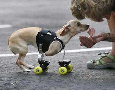 Nice wheels! This photo warms my heart.