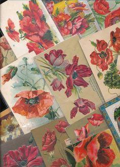 FLORAL LOT of  17  POPPIES VINTAGE FLOWERS GREETINGS POSTCARDS-kkk672