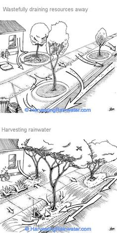 Street Orchards for Community Security - Clever ideas on harvesting rainwater (Street orchards, rain gardens & curbcuts) by Brad Lancaster - Permaculture Design, Rainwater Cistern, Rainwater Drainage, Water From Air, Water Collection, Water Management, Rainwater Harvesting, Rain Garden, Water Conservation