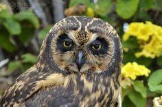 Owl in Galapagos - http://www.happyingalapagos.com/owl-galapagos/