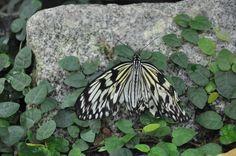 Butterfly House - Vienna Butterfly House, Vienna, My Photos
